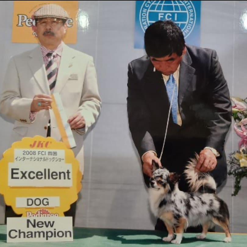 懐かしい画像ハリハリ~我が家初代マールのセル坊っちゃん一応ね、日本初マールのチャンピオン犬ですセルの孫娘がゾロっちのママんだからひ孫がゾロっちですリセットして、いいね!コメント消えちゃってごめんなさい