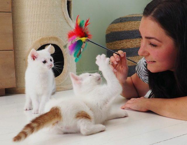 ''Ook als Crazy Cat Lady kun je er representatief uitzien''