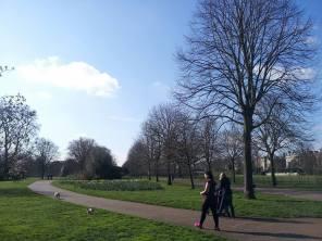 Kensington Garden 1