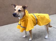 Allie raincoat