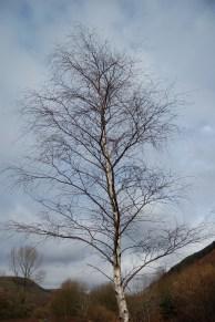 Trees by Neil Richmond
