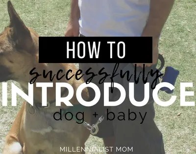 How To Introduce a Dog to a Newborn
