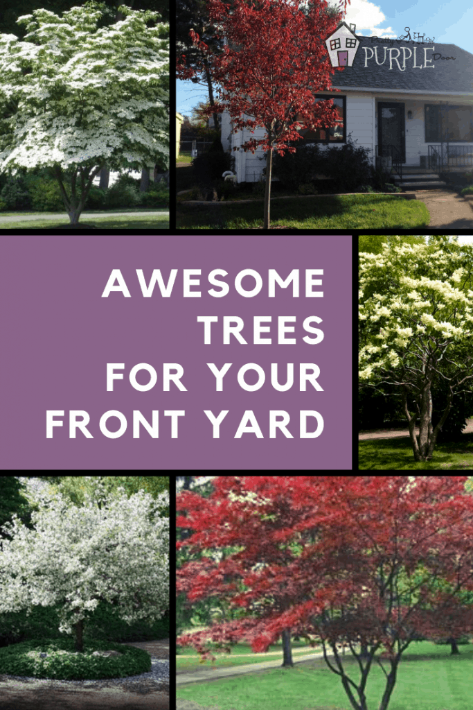 Awesome ornamental trees for your front yard