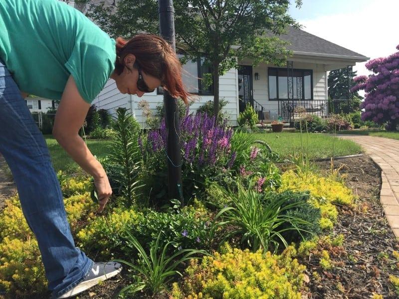 Diy Beginner Landscaping 4 Season Garden Design Pretty Purple Door