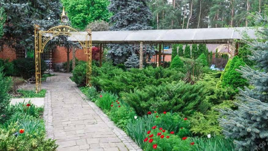 Evergreen shrubs are a great for creating structure in your garden when you don't have fences, buildings or other hardscape elements.