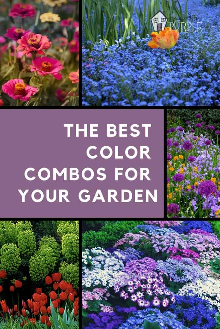 garden color schemes pinterest image