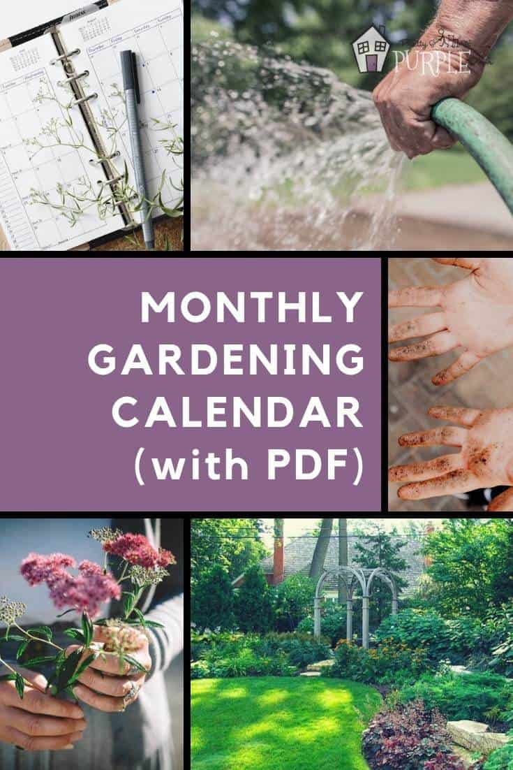 Monthly gardening calendar for busy gardeners