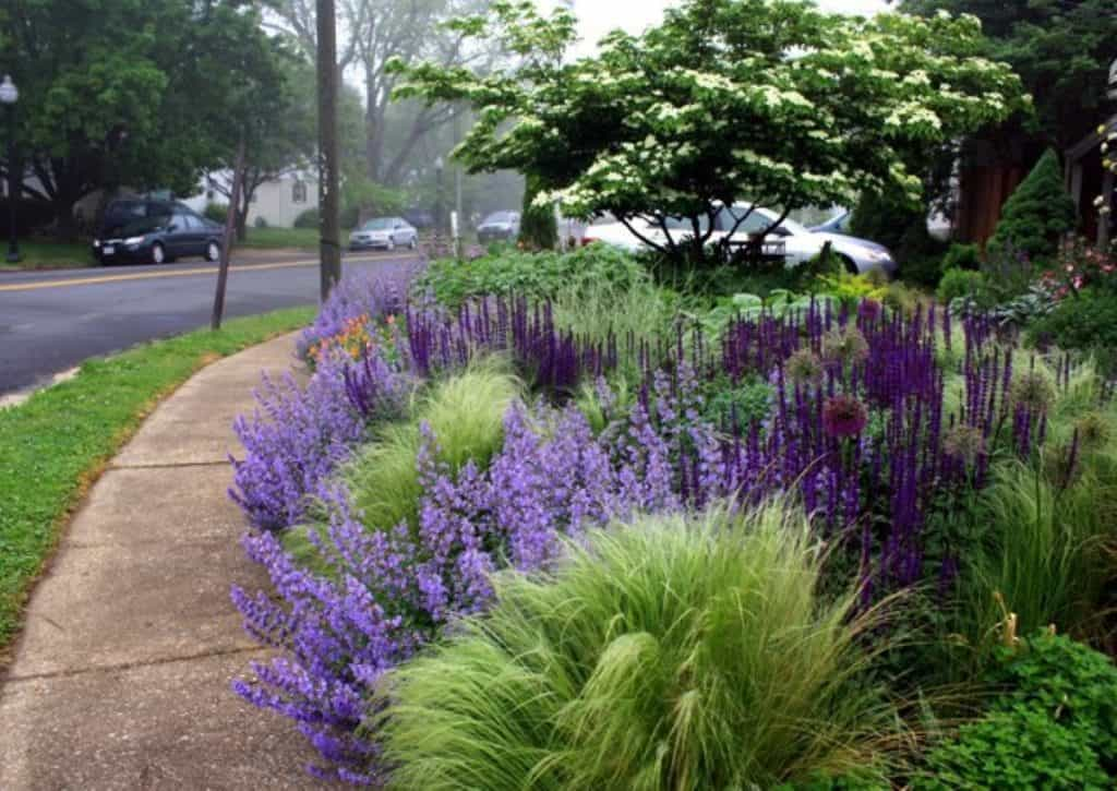Salvia, Lavendar and mexican wheat grass make great seasonal flowers and plant groupings