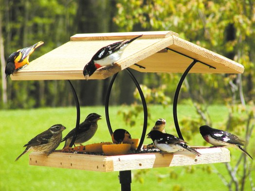 Hut Cafe For Birds