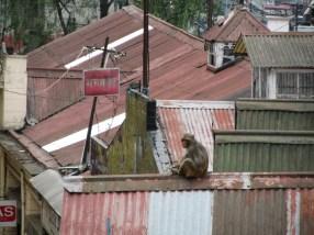 A monkey enjoying its morning