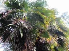 Palms at the botanical garden