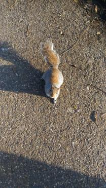Gli scoiattoli sono perfetti.