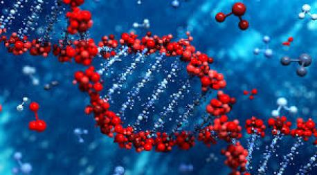 genetica-vascular
