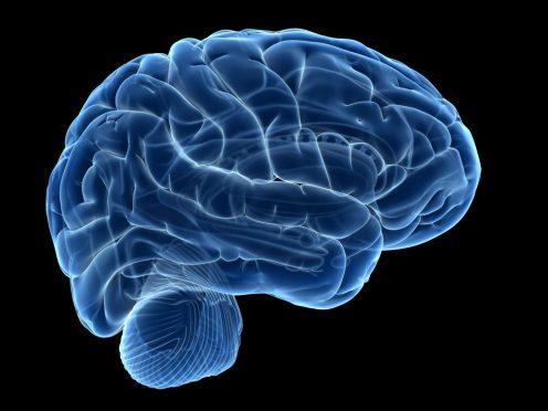 opioids_brain_GettyImages-539665361-1024x768