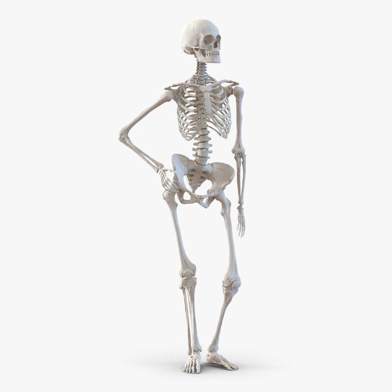 human female skeleton pose max