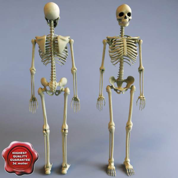 20+ Science Project 3d Skeletal Pictures and Ideas on Meta Networks