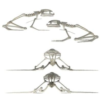 frog skeleton 3d model
