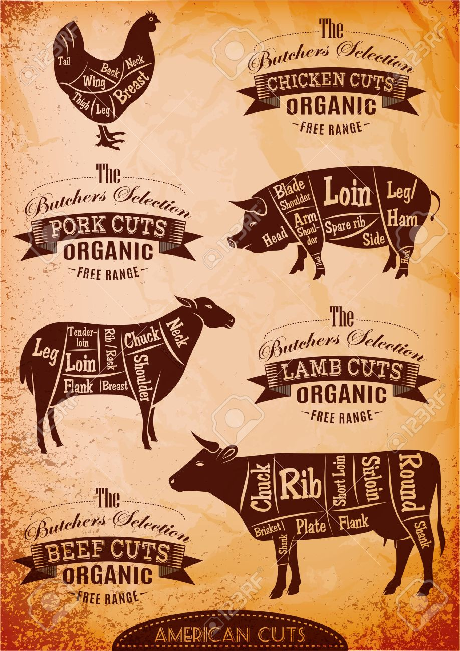 hight resolution of diagram cut carcasses of chicken pig cow lamb stock vector 27674023