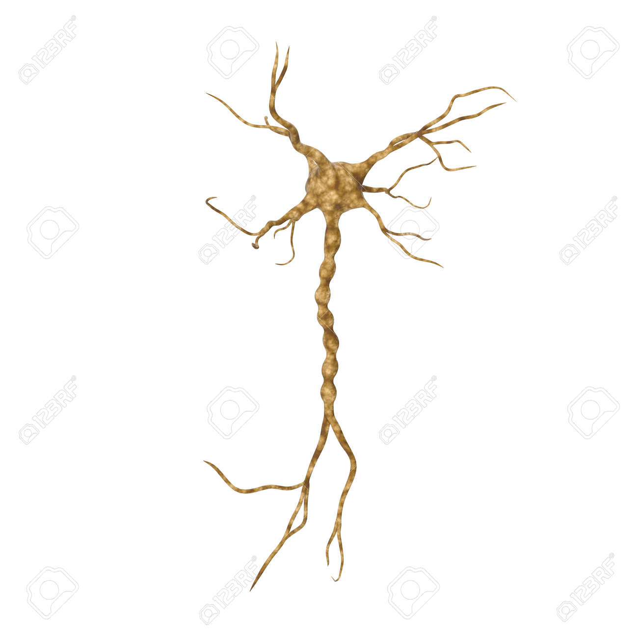 hight resolution of illustration single neuron nervous system on white 3d illustration