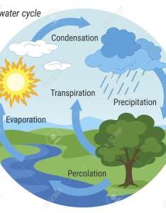 Vector schematic representation of the water cycle in nature illustration diagram environment also rh rf