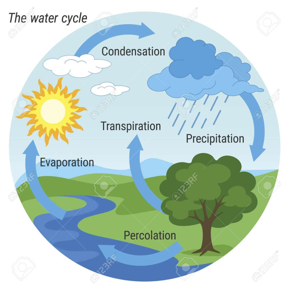 medium resolution of vector vector schematic representation of the water cycle in nature illustration of diagram water cycle cycle water in nature environment