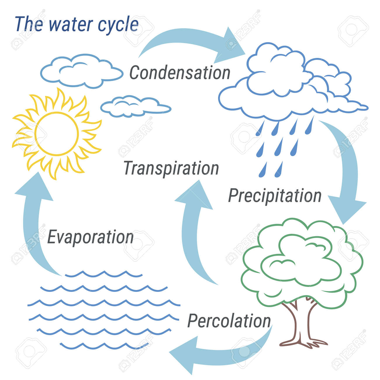 hight resolution of vector vector schematic representation of the water cycle in nature illustration of diagram water cycle cycle water in nature environment