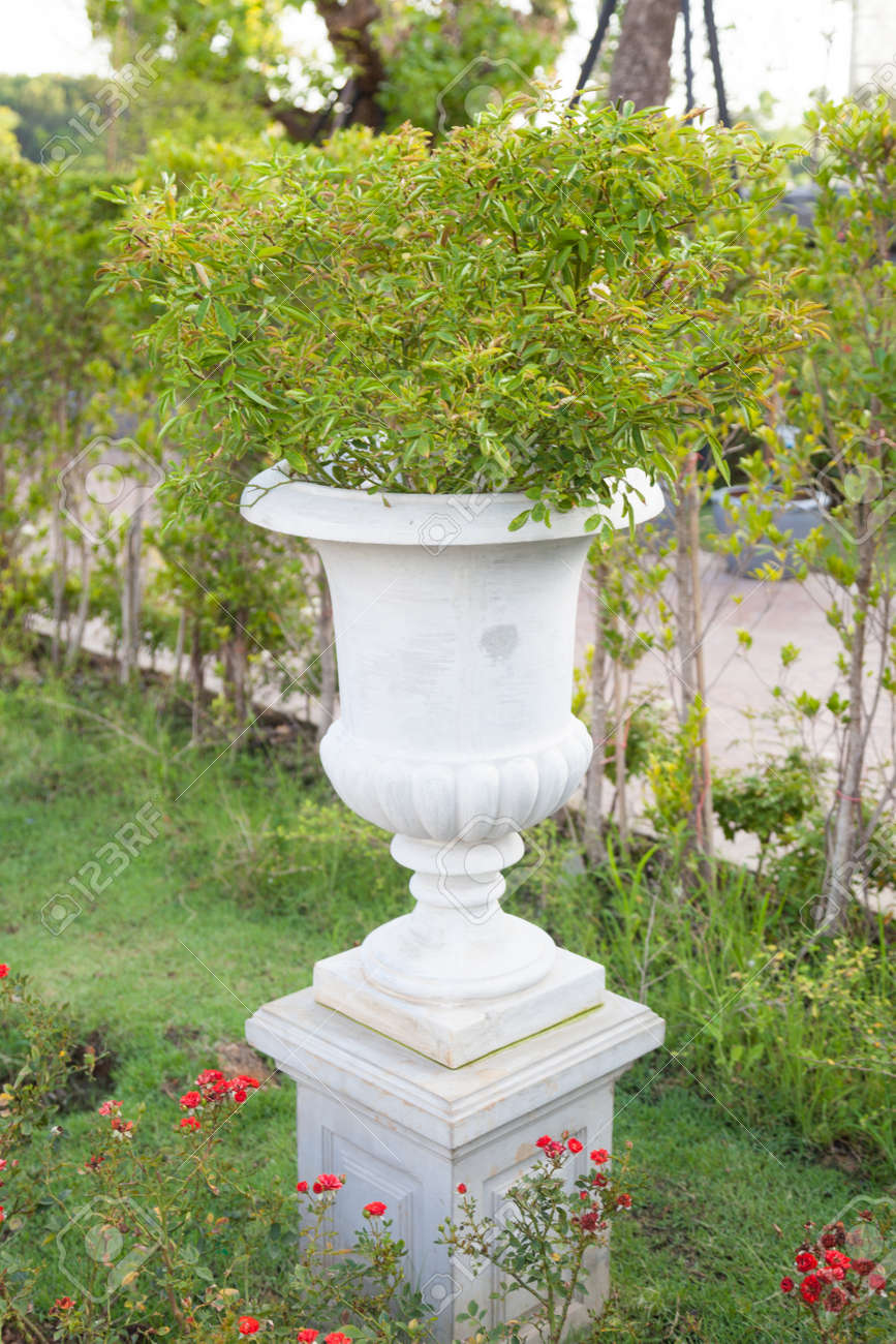 Decoration Jardin Pot White Jardiniere Trees Planted In Pots Decorations In The Garden