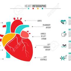 Realistic Heart Diagram Trailer Wiring 7 Pin 5 Wires Australia Human Template Ukran Expolicenciaslatam Co Vector Infographic Medical And Healthcare