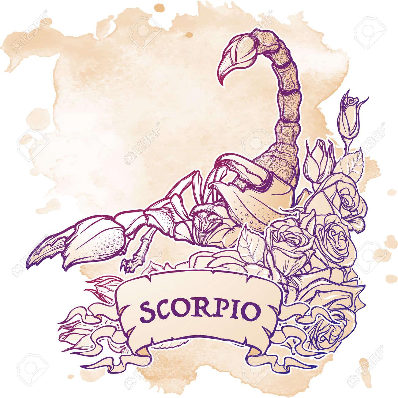 Signo Zodiacal Escorpio Escorpión Realista Detallada En Un Marco
