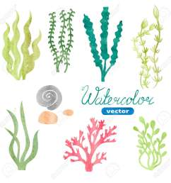 set of watercolor seaweed corals and stones isolated on white background underwater watercolor algae [ 1300 x 1300 Pixel ]