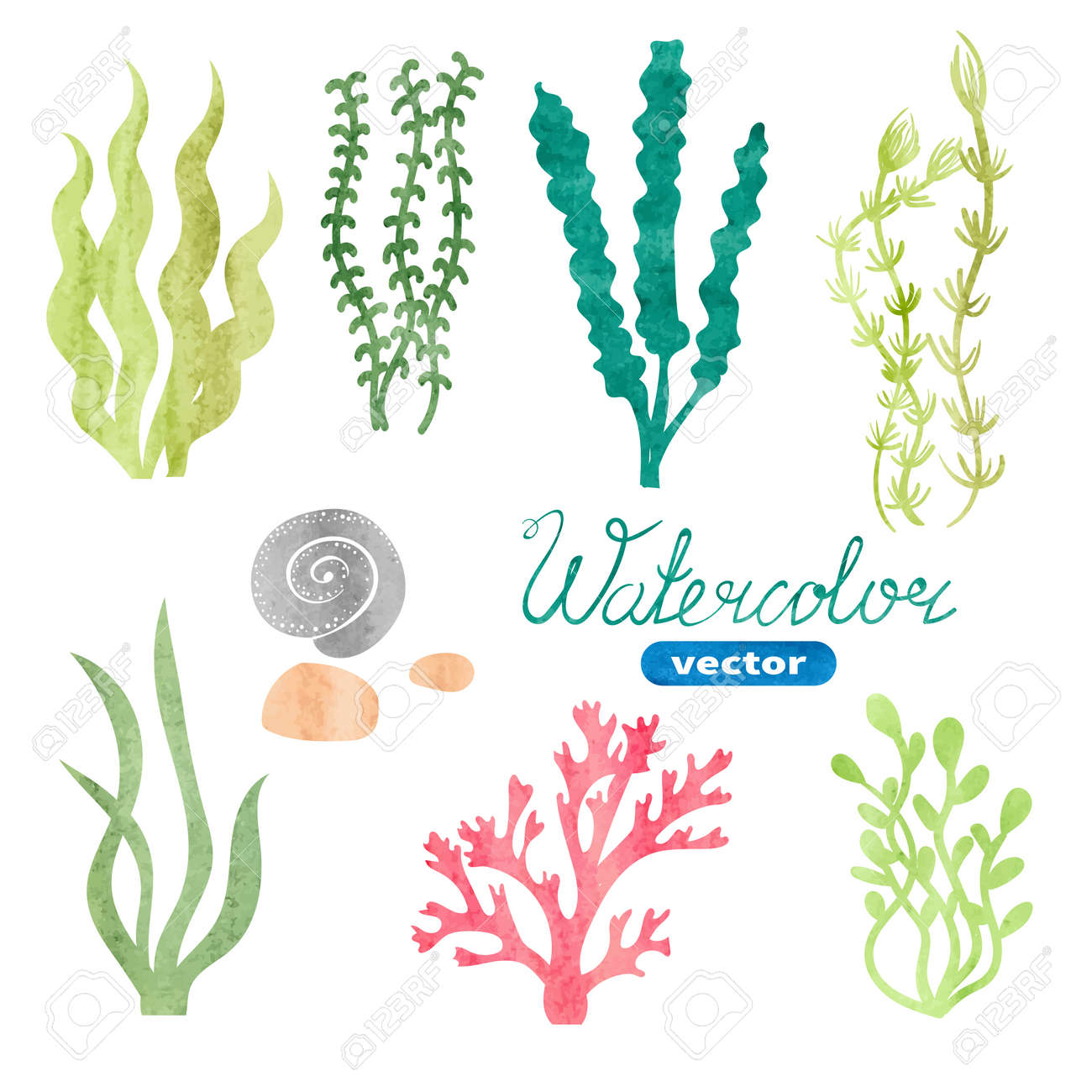 hight resolution of set of watercolor seaweed corals and stones isolated on white background underwater watercolor algae