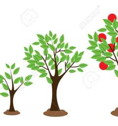 tree growth diagram wiring diagram schematics labeled tree diagram tree growing diagram [ 1300 x 747 Pixel ]