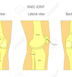 vector illustration anatomy of a healthy human knee joint isolated on white background front back and side or lateral view of the knee joint  [ 1300 x 835 Pixel ]