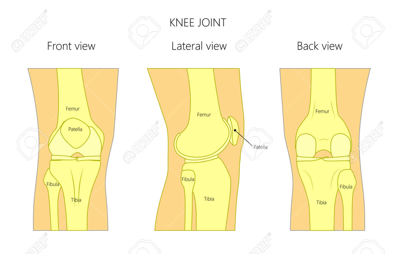 hight resolution of vector illustration anatomy of a healthy human knee joint isolated on white background front back and side or lateral view of the knee joint