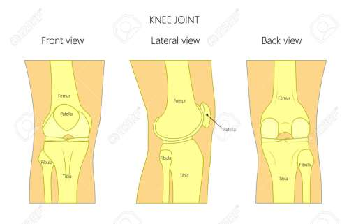 small resolution of vector illustration anatomy of a healthy human knee joint isolated on white background front back and side or lateral view of the knee joint