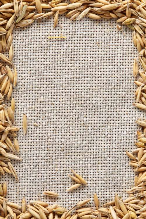 small resolution of frame made of unpeeled oat grains on homespun or burlap tablecloth background top view close up macro selective focus dietary food vegan background