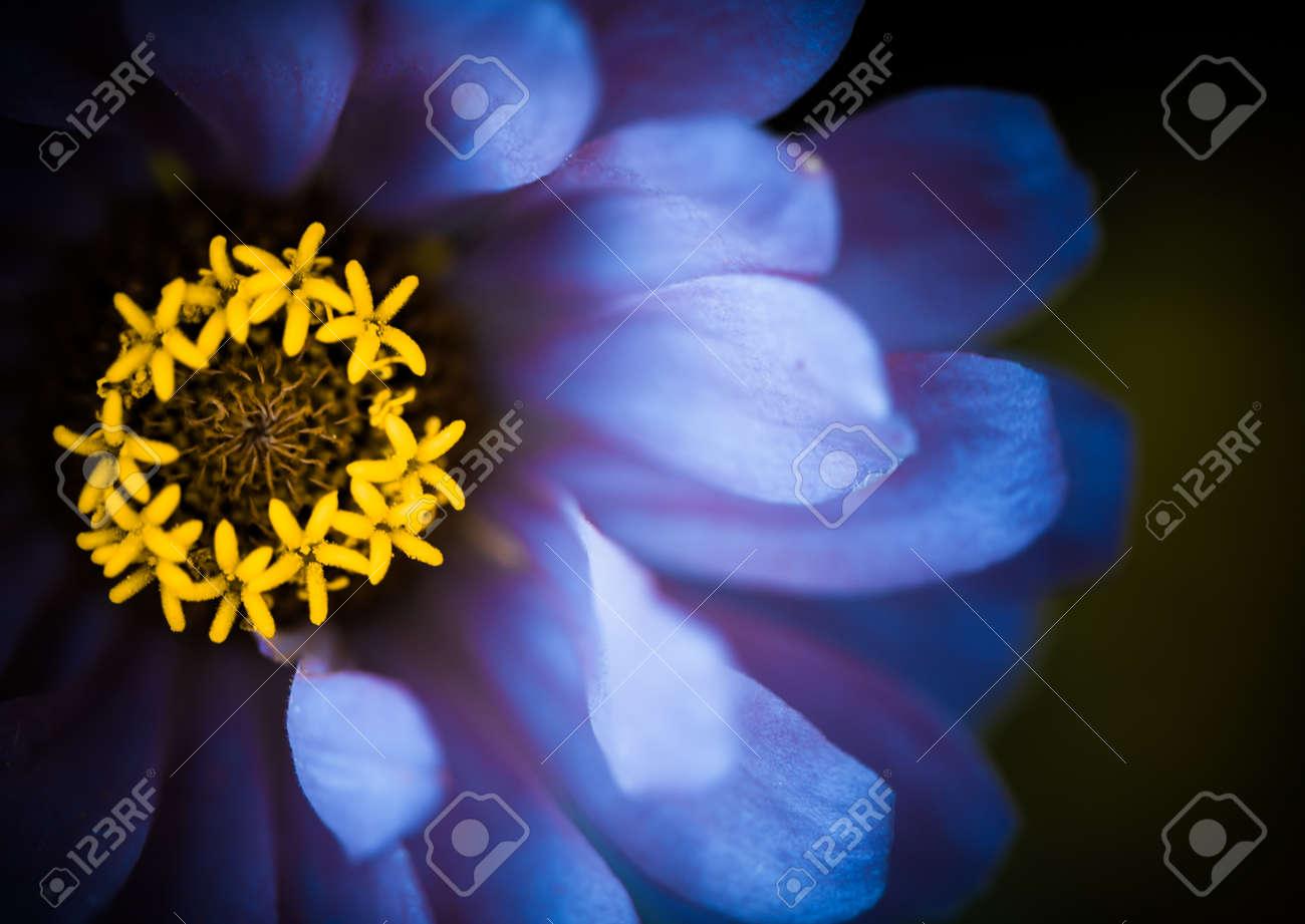 blue flower leafs closeup
