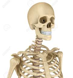 torso of human skeleton isolated medically accurate 3d illustration stock illustration 66965821 [ 1122 x 1300 Pixel ]