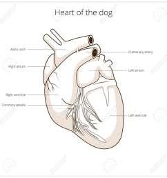 dermatology dog diagram wiring diagram data dog body diagram dermatology [ 1300 x 1300 Pixel ]
