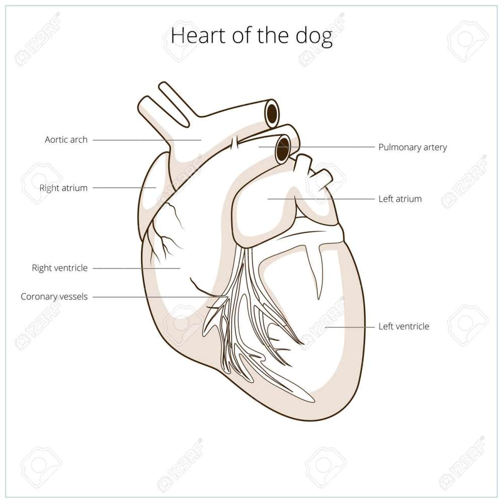 medium resolution of dermatology dog diagram wiring diagram data dog body diagram dermatology