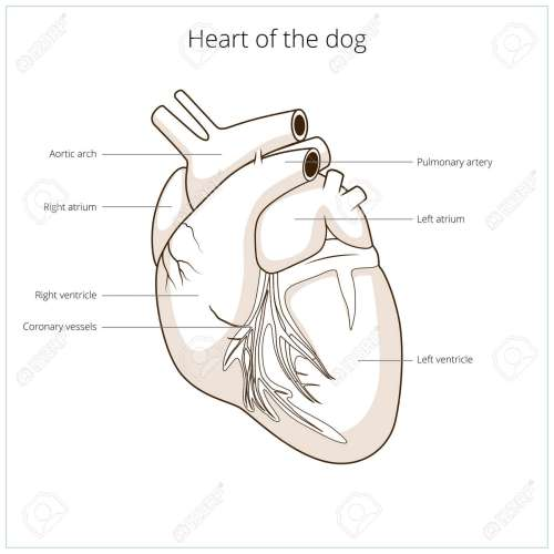 small resolution of dermatology dog diagram wiring diagram data dog body diagram dermatology