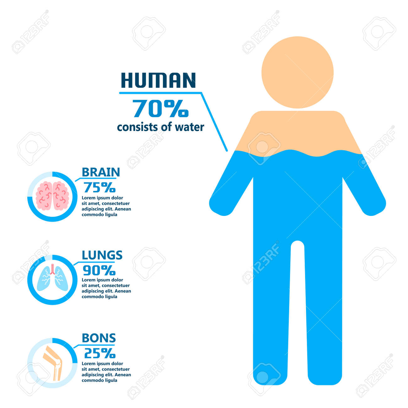 body water drink infographics