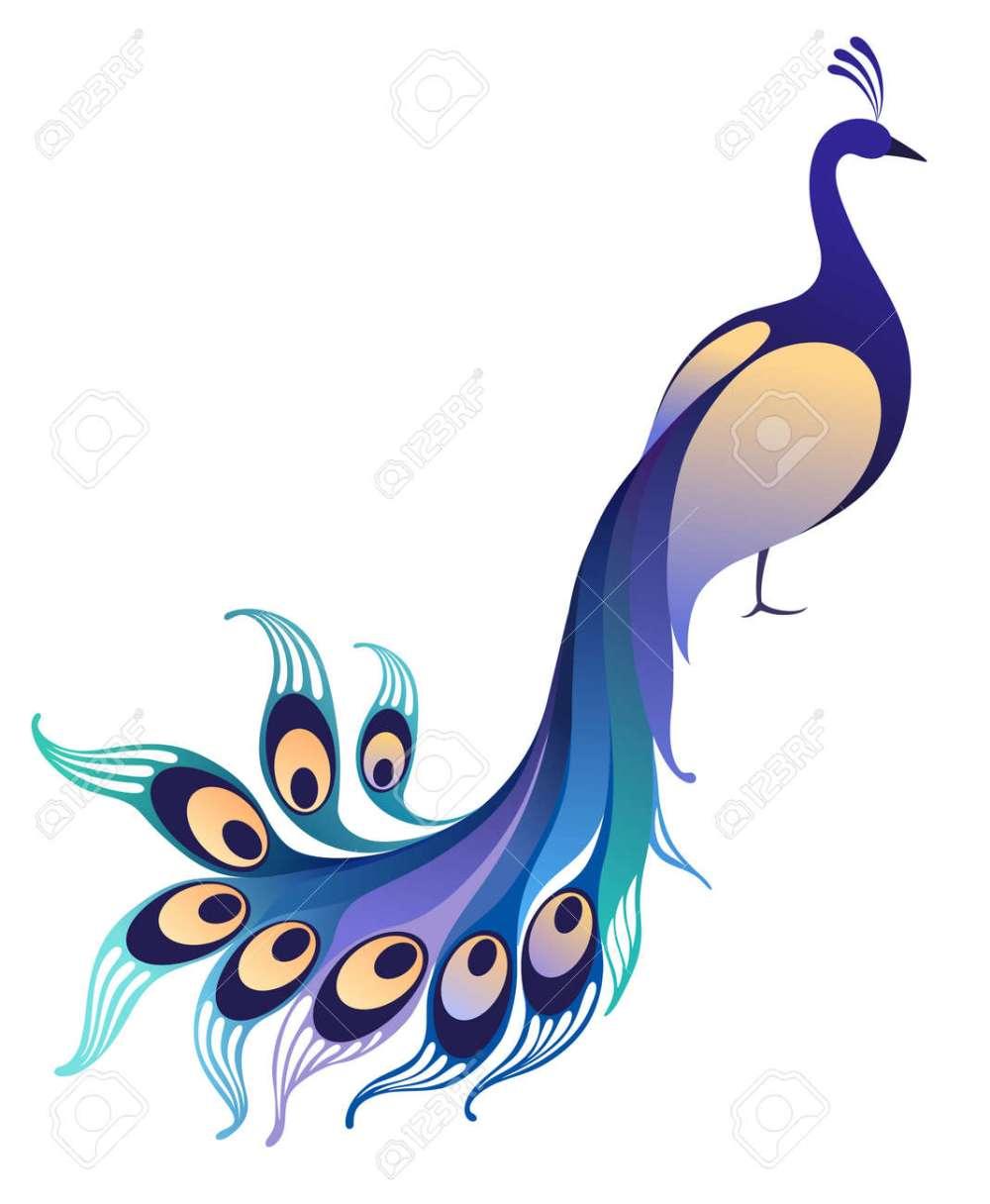 medium resolution of peacock