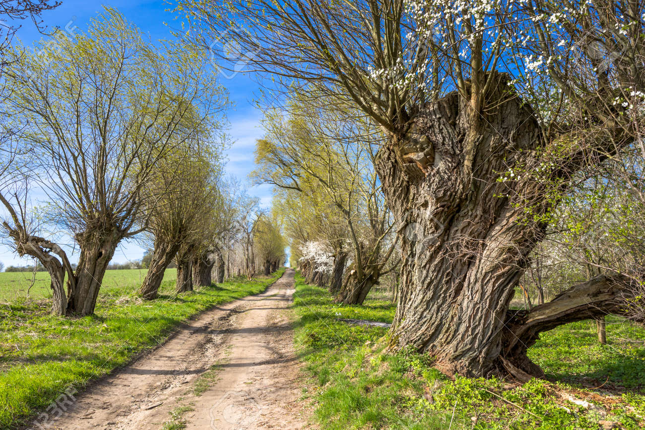 green spring landscape with