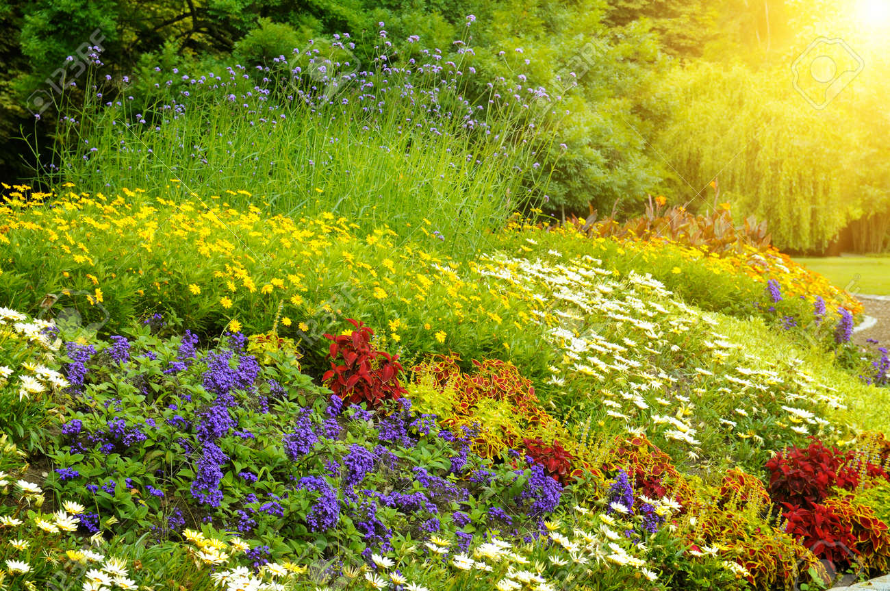 Beautiful Background Of Bright Garden Flowers Stock Photo Picture And Royalty Free Image Image 35133842
