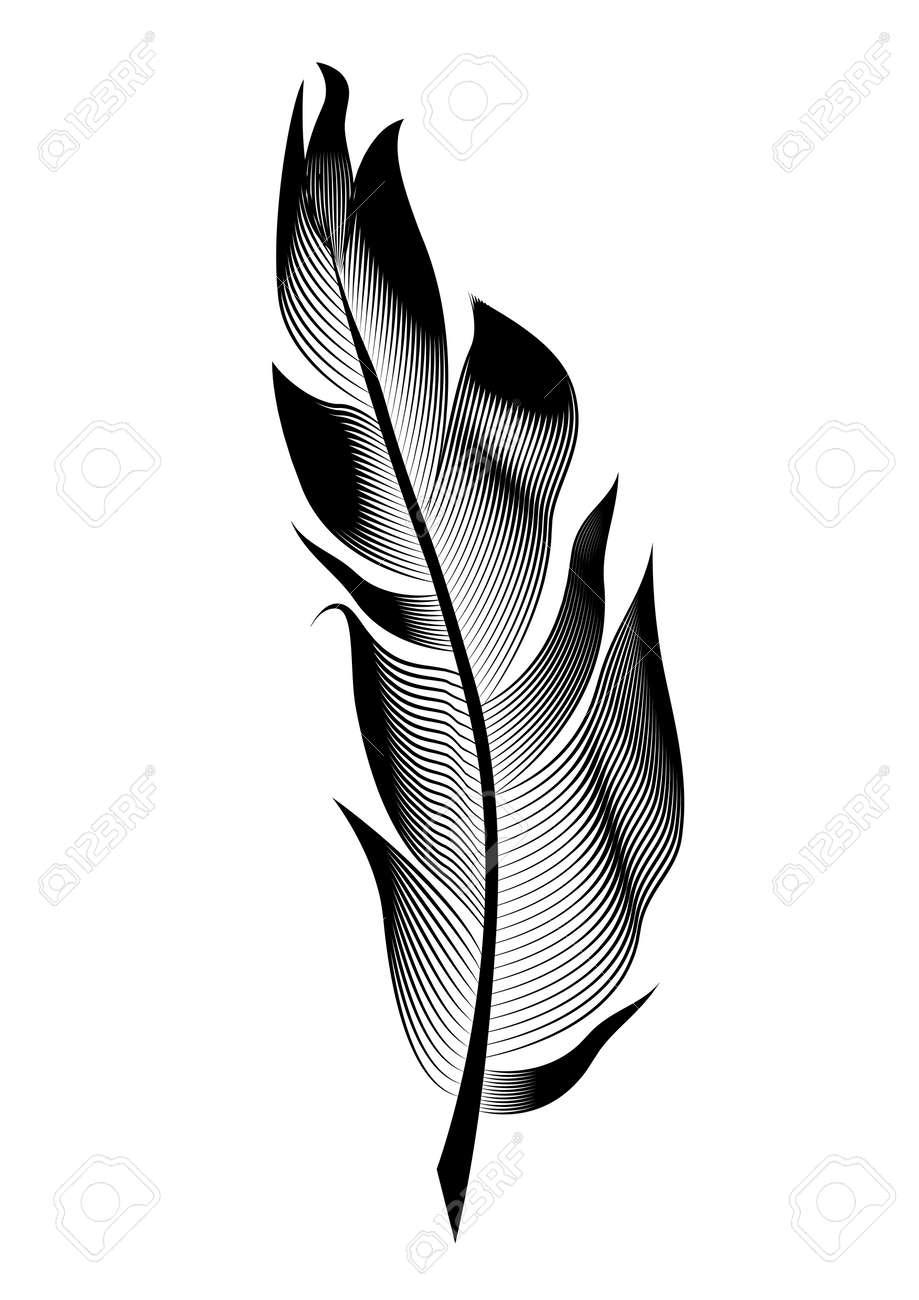plume d oiseau stylisee vectorielle objet lineaire pour la decoration