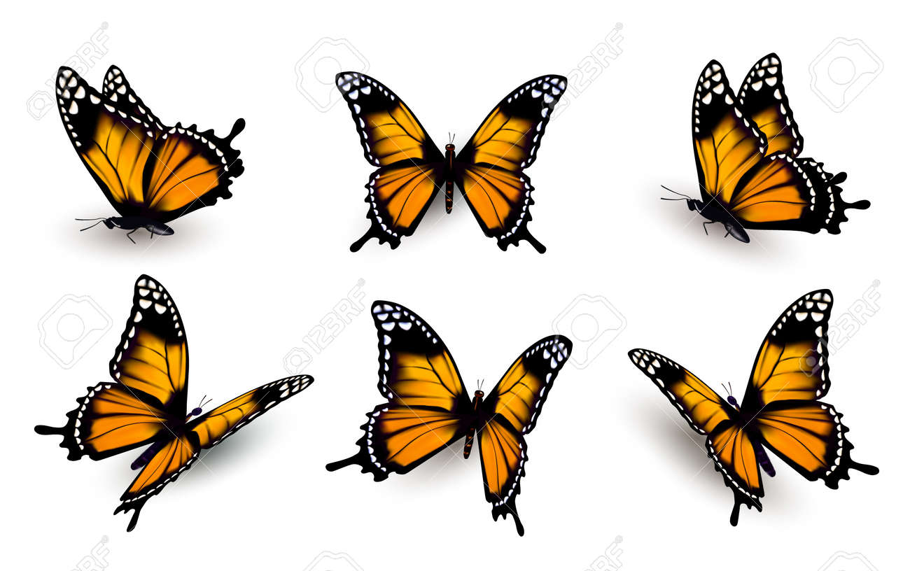 hight resolution of six butterflies set illustration