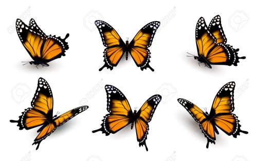 small resolution of six butterflies set illustration