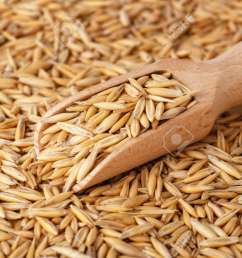 natural oat grains with husk in scoop for background closeup shot heap of organic [ 1300 x 866 Pixel ]