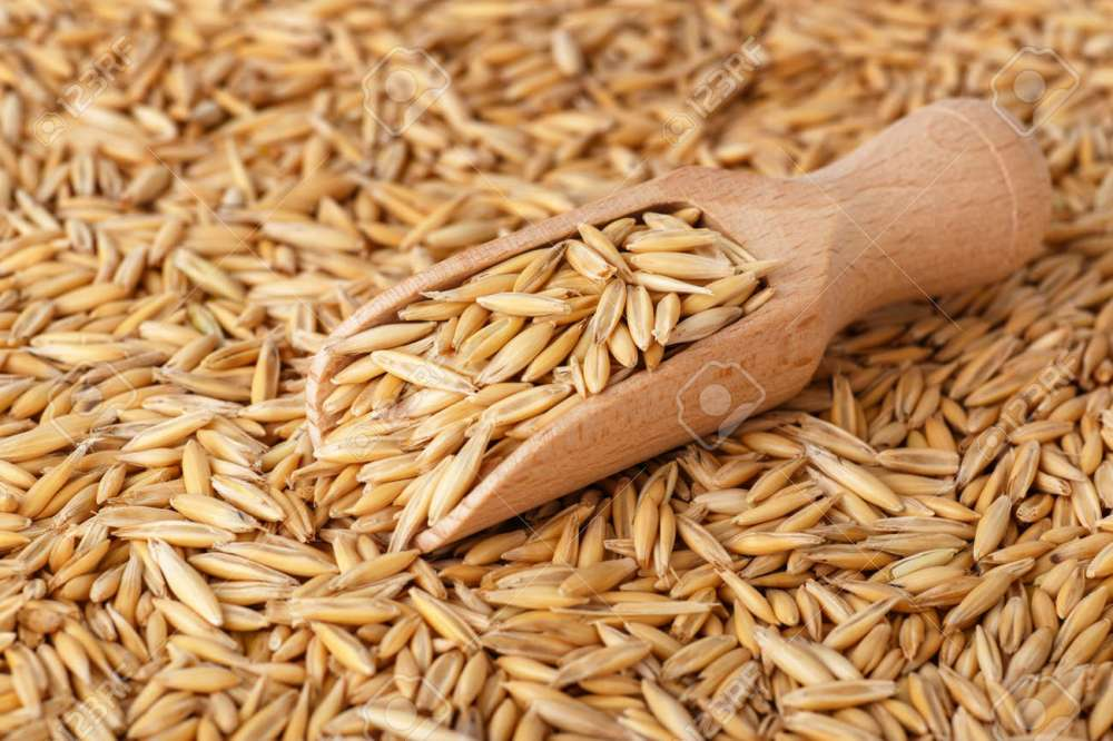 medium resolution of natural oat grains with husk in scoop for background closeup shot heap of organic